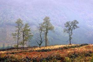 árvores solitárias