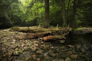 tronco de árvore caído na margem do rio no meio da floresta