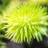 foto macro de folhas verdes e frescas, dof raso