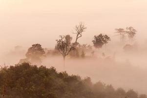 montanha de névoa do nascer do sol foto