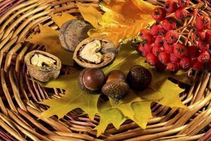 folhas amarelas de outono, nozes, frutas vermelhas e bolota