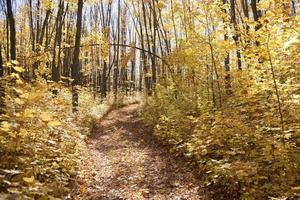 trilha amarela