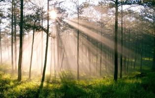 o sol brilha através da floresta faz lindo raio de sol ao amanhecer foto