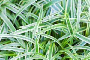 lindo arbusto de folhas verdes na temporada de verão foto