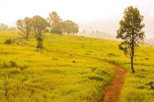 prado verde, parque nacional khao yai na tailândia foto