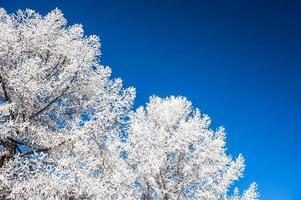 árvores cobertas de neve e céu azul escuro