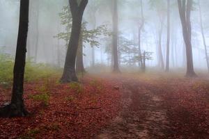trilha sonhadora no nevoeiro foto