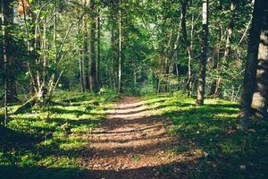 trilha de turismo cênica e bela na floresta perto do rio foto