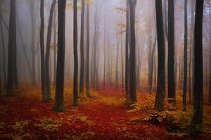 trilha através de árvores escuras foto