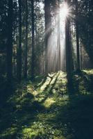 estrada florestal com raios de sol da manhã. retro granulado