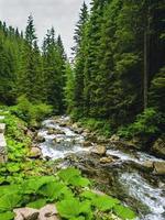 bela cena com rio de montanha na floresta verde dos Cárpatos