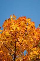 folhas amarelas e vermelhas em árvores no parque de outono foto