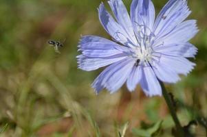 flores silvestres da primavera foto