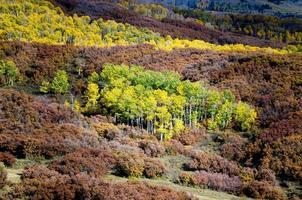 outono aspen cercado por carvalhos foto
