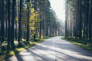 o sol da manhã ilumina a estrada de outono. aparência de filme granulado retrô.