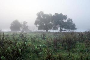 manhã nublada de outono foto