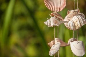 decoração feita de conchas do mar no fio foto