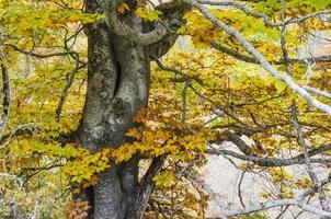 folha de faia em um outono.