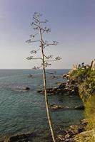 paisagem marinha com agaves e a velha torre de nervi, riviera italiana