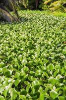 plantas tropicais nas seychelles