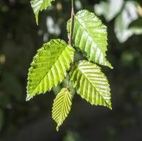 linda folha de uma árvore