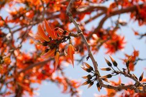 flores laranja palas e fundo de céu azul foto