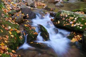 riacho de outono
