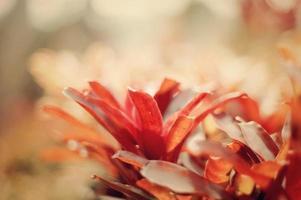 folha vermelha em fundo desfocado foto