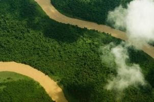vegetação aérea