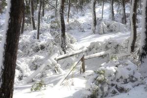 montanha de neve e árvores