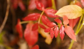 feche as folhas vermelhas