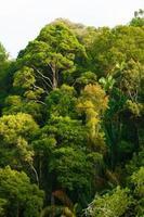 copa da floresta tropical