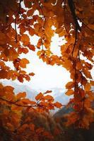quadro de folhas de árvore