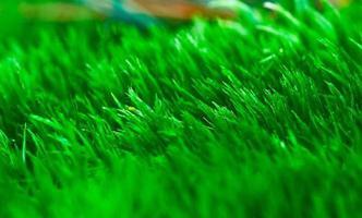 close-up de musgo