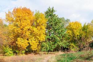 árvores amarelas e verdes