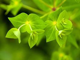 folhas frescas