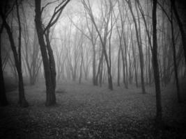 névoa e árvores