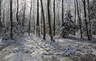queda de neve após parada do pântano pela manhã