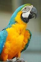 lindo pássaro arara foto