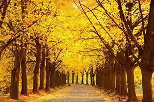 beco de limão do outono foto