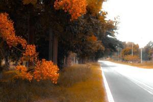 árvores e flores na estrada