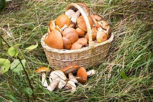 cesta com aspen na grama