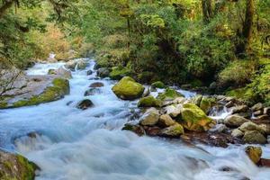 riacho em Fiorland foto