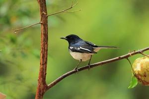 pássaro pega foto