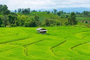 campo de arroz com casa de campo na tailândia foto