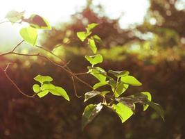 galho de uma árvore ao sol foto