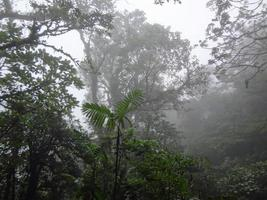 floresta tropical da costa rica foto