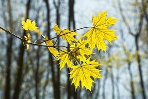 folhas em um galho da árvore