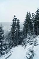 montanhas europeias - Krkonose foto