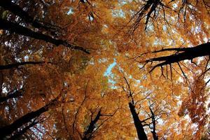 folhas amarelas de outono